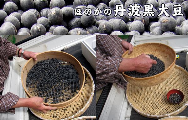 ほのかの丹波黒大豆